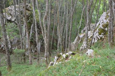 Kanjon Gučine
