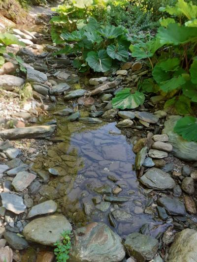 Korito rijeke ispod vodozahvata