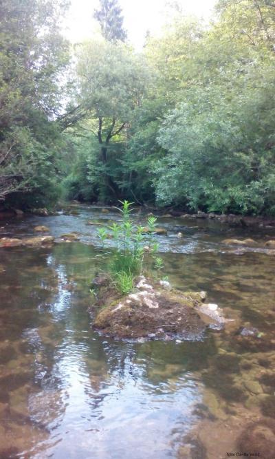 Rijeka Kaljina