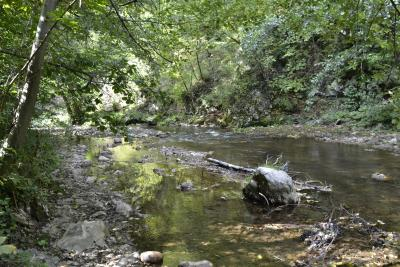 Rijeka Stavnja
